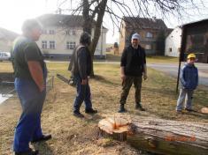 Brigáda ve Svinné - poražení nebezpečného stromu